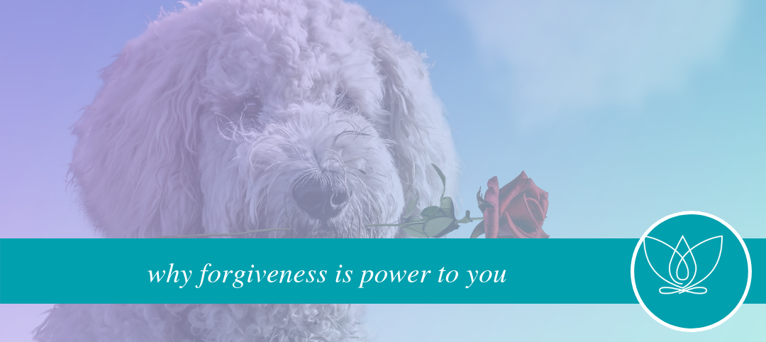 why forgiveness is power to you
